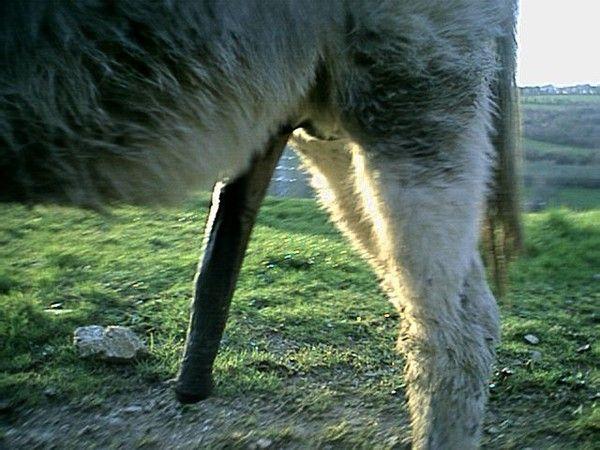 Vidéos d'âne noir chaud